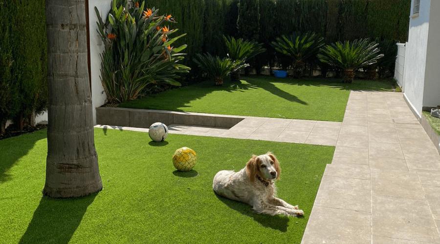césped artificial y mascota en jardín