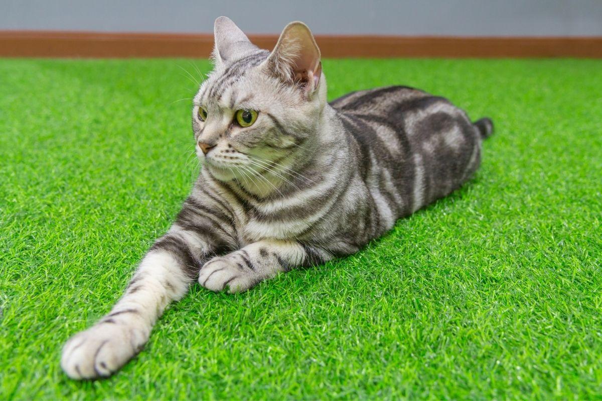 césped artificial para gatos